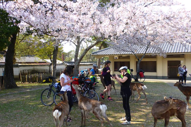 japonia na rowerze (363)